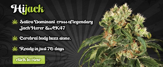 Auto Seeds Hijack Autoflowering Seeds On Sale Here