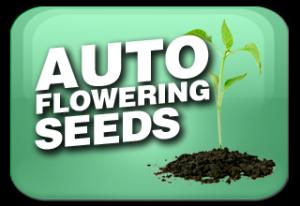 Autoflowering Marijuana Seeds