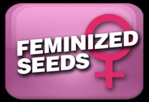 Feminized width =
