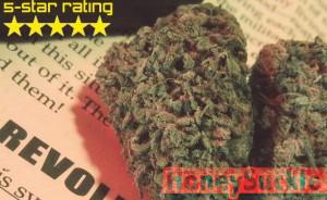 HONEY B SEEDS