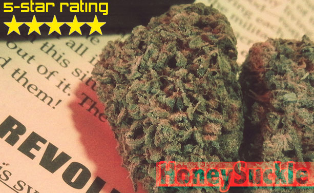 HONEY B SEEDS