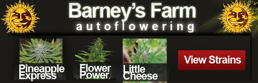 Barneys Farm Autoflowering Seeds