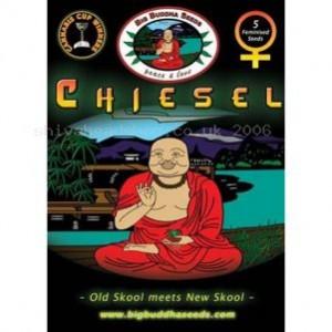 Big Buddha Seeds Chiesel