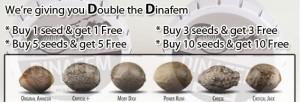Dinafem Double Seeds Offer - BUY HERE