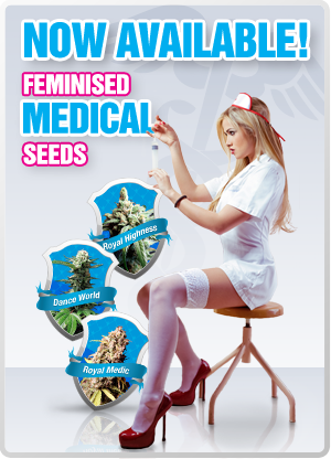 Medical Marijuana Seeds