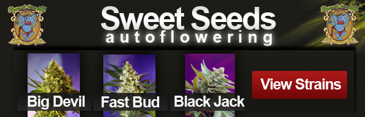 Sweet Seeds Medical Marijuana Seeds