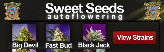 Sweet Seeds Autoflowering