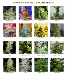Where To Get Marijuana Seeds.