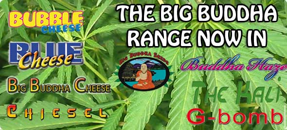 Buy Big Buddha Blue Cheese Seeds