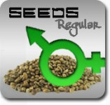 Regular Outdoor Marijuana Seeds