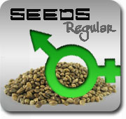 Regular Marijuana Seeds