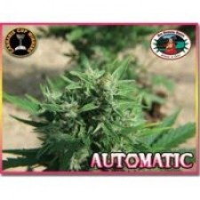 Big Buddha Seeds Automatic