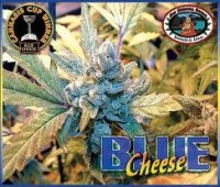 Big Buddha Seeds Blue Cheese
