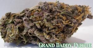 Purple Kush Marijuana Seeds.