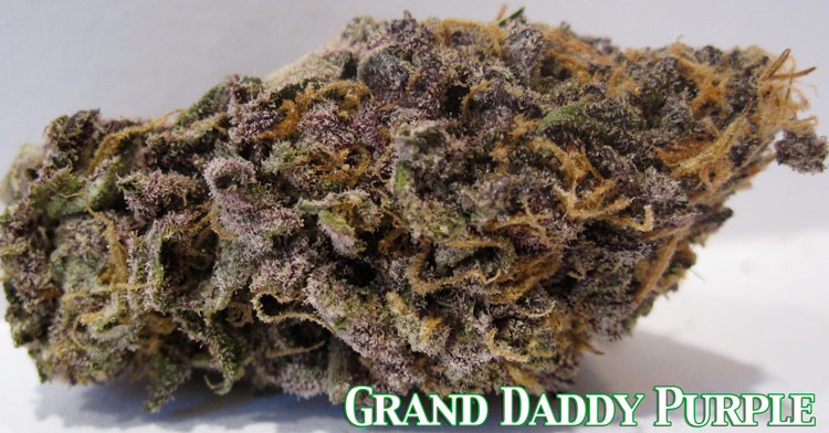 Purple Kush Marijuana Seeds.