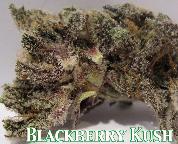 BLACKBERRY OG KUSH