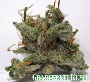 GRAPEFRUIT KUSH