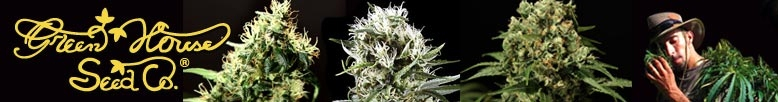 Green House Seeds Highest Quality Marijuana Seeds