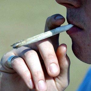 Cannabis width =
