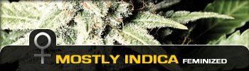 Green House Seeds Mostly Indica