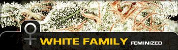 Green House Seed White Family
