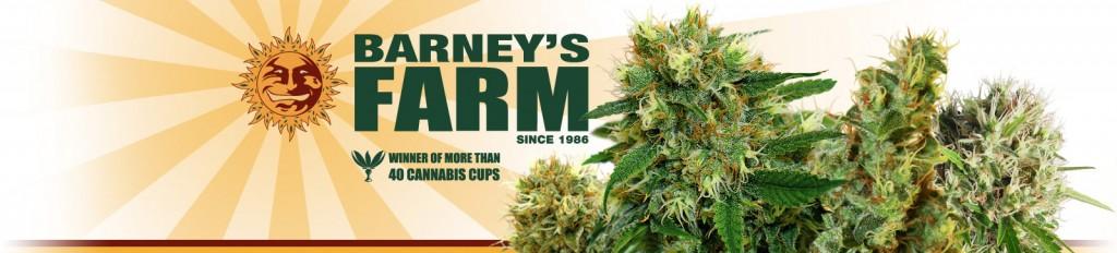 Barneys Farm Marijuana Seeds