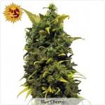 Barneys Farm Blue Cheese Medical Marijuana Seeds
