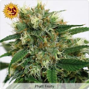 Barneys Farm Phatt Fruity