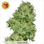 Barneys Farm Utopia Haze Marijuana Seeds.
