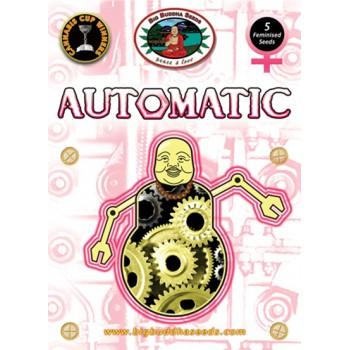Big Buddha Seeds Automatic Feminized.