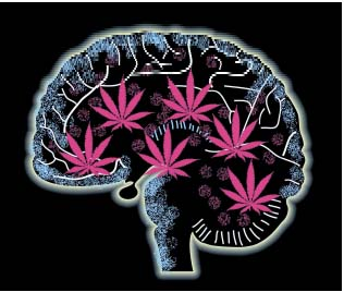 Medical Marijuana Effects On The Brain.