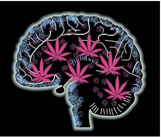 Medical Marijuana Effects On The Brain.