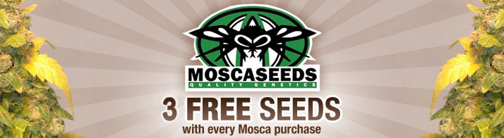 3 free mosca with every purchase