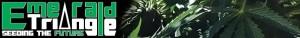 Emerald Triangle Seeds
