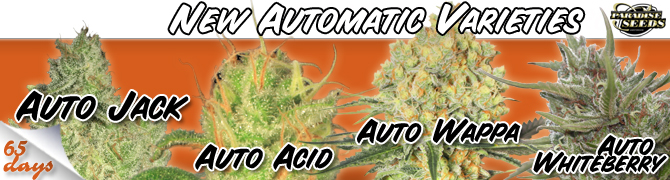 Feminized Autoflowering Seeds Now In Stock