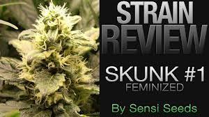 Skunk Seeds Skunk 1
