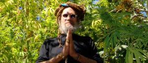 Soma Seeds Medical Marijuana Seeds.