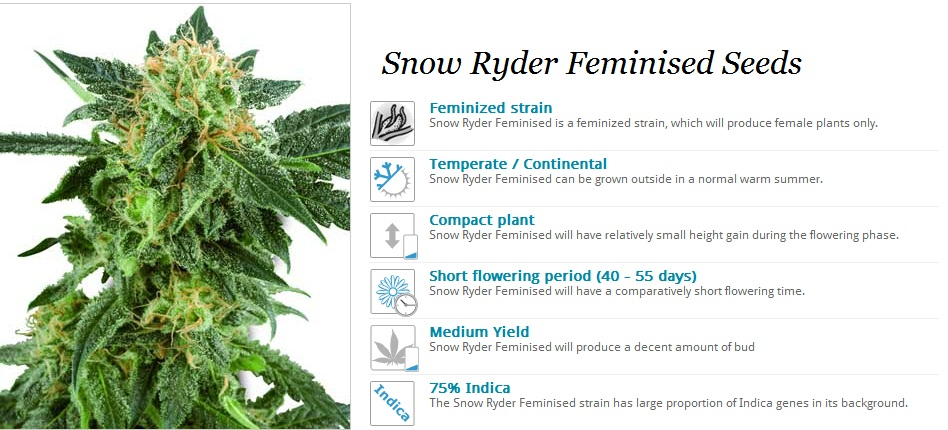 White Label Seeds Snow Ryder
