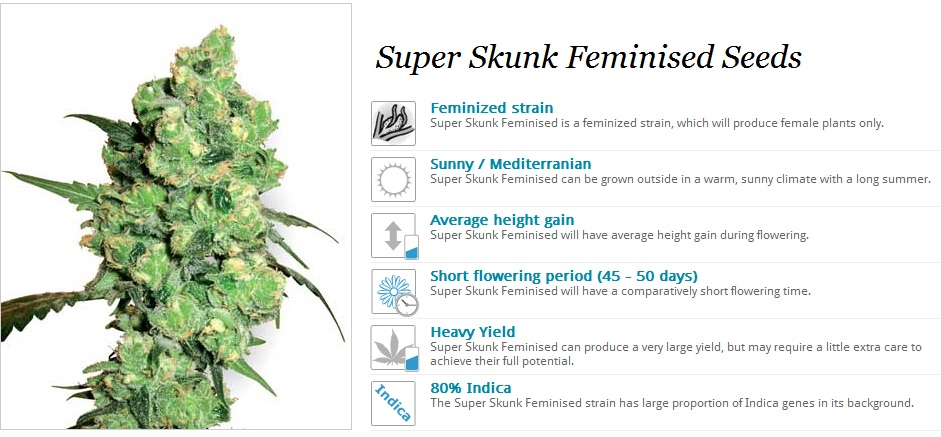 White Label Seeds Super Skunk