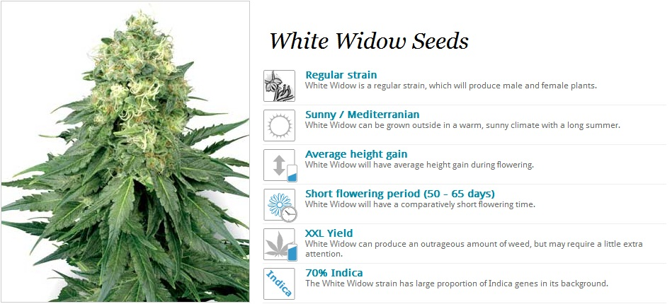 White Label Seeds White Widow