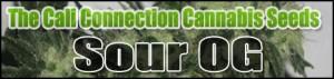 Cali Connection Cannabis Seeds Sour OG Kush