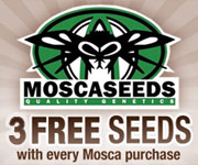 3 FREE Mosca Seeds With Every Purchase