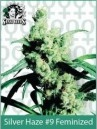 Sensi Seeds Silver Haze Feminized