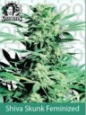 Sensi Seeds Shiva Skunk Feminized