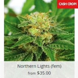 Buy Northern Lights Marijuana Seeds