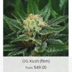 Buy OG Kush Marijuana Seeds