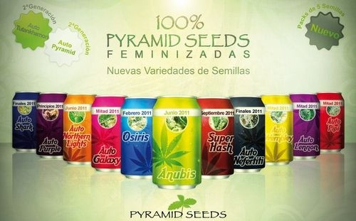 Pyramid Seeds Collection