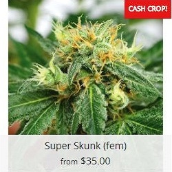 Buy Super Skunk Marijuana Seeds