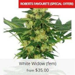Buy White Widow Marijuana Seeds