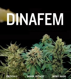 Dinafem Seeds are available today through us here at VegPage